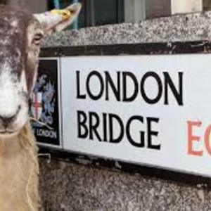 A Woolly Tale of the City
